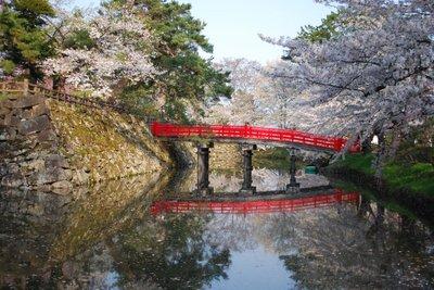 弘前公園早朝の桜.jpg