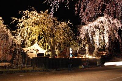 角館の桜2.jpg